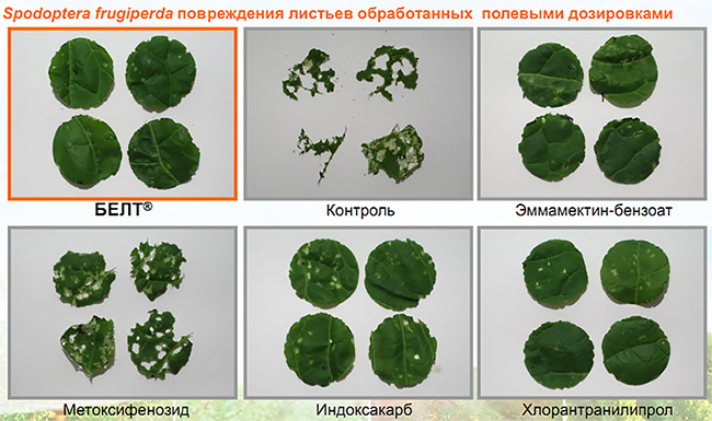 Активность различных инсектицидов